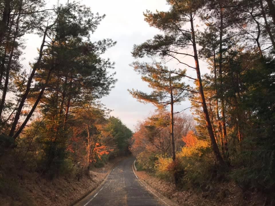 アジサイロード(馬尻山縦断道)の夜明け